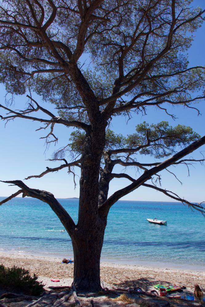 Le pin et la mer